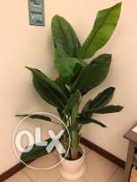 Plastic Banana Plant and Decorative Pot