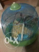 Birds Cage used in good condition
