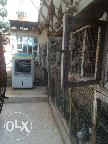 Dismantable and Re-erectable Chicken Coups, Aviary, Birds& Accessories الثمامة -  6