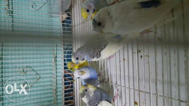 6 badji 3 male and 3 female