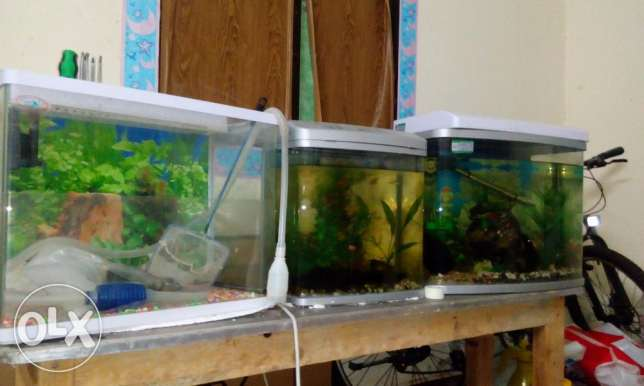 Free Aquarium and its accessories