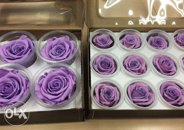 infinity roses / preserved roses