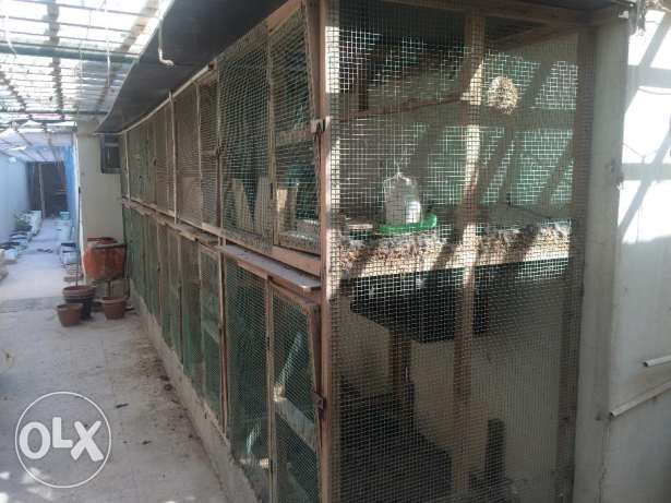 Dismantable and Re-erectable Chicken Coups, Aviary, Birds& Accessories الثمامة -  2