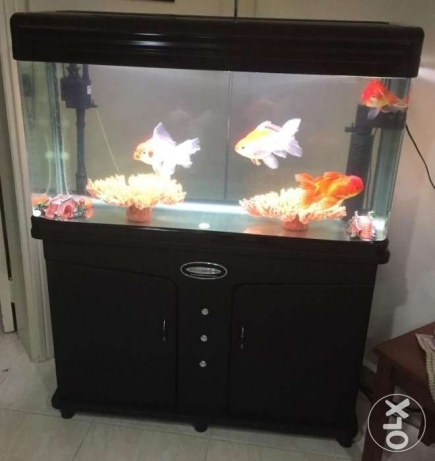 1 Meter Fish Aquarium for Sale