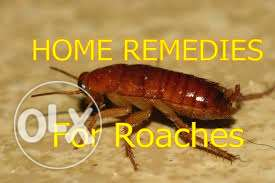 Best cockroaches control service in qatar