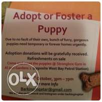 dogs for adoption open day