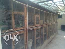 Dismantable and Re-erectable Chicken Coups, Aviary, Birds& Accessories
