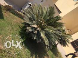 AdV5.DUHAIL,03BHK SF Spacious Villa