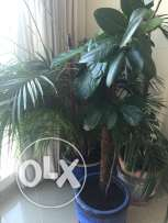 Beautiful flourishing House plants ! Little Jungles...INDOOR Plants