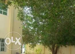 Good Single 4 B/R Villa near Salwa Road in Al-Waab/QR 11500