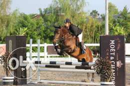 Professional horse trainer (dressage, showjumping) and instructor