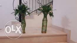 Bamboo plants for sale